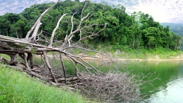 Falling tree in the lake. video