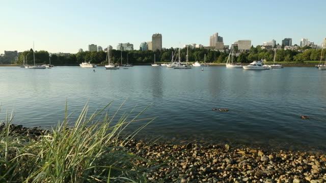 False Creek Ducks, Anchored Boats. video