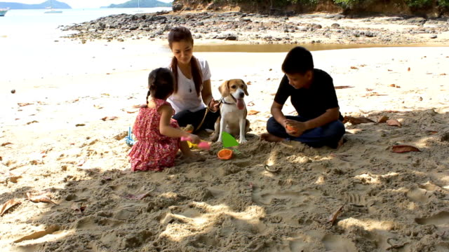 Family and dog play with sand video