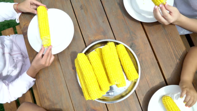 Family corn eating contest in the garden. Children have fun eats sweet corn cob video
