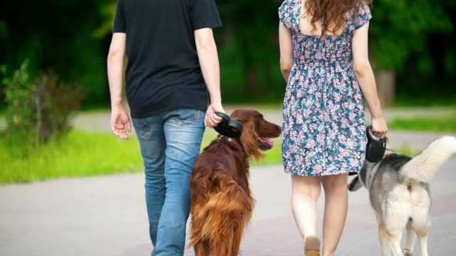 Family couple with pets dogs walking in park - man and woman walks with irish setter and husky Family couple with pets dogs walking in park - man and woman walks with irish setter and husky, telephoto shot irish setter stock videos & royalty-free footage