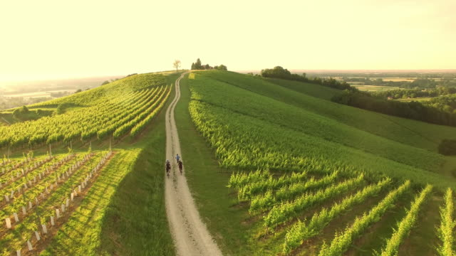 aerial family cycling in countryside - azienda vinivola video stock e b–roll
