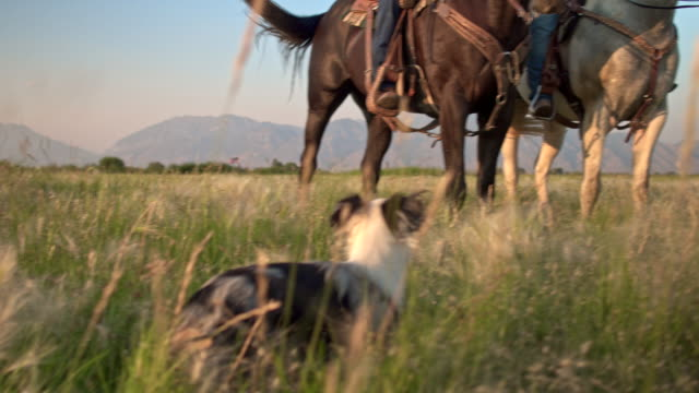 family enjoying the day horseback riding in the fields with their dog - ranch video stock e b–roll