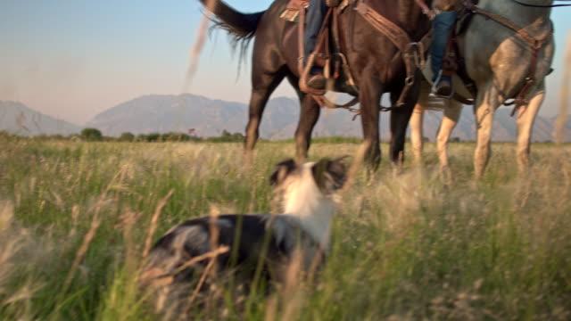 familie genießen den tag reiten in den bereichen mit ihrem hund - ranch stock-videos und b-roll-filmmaterial
