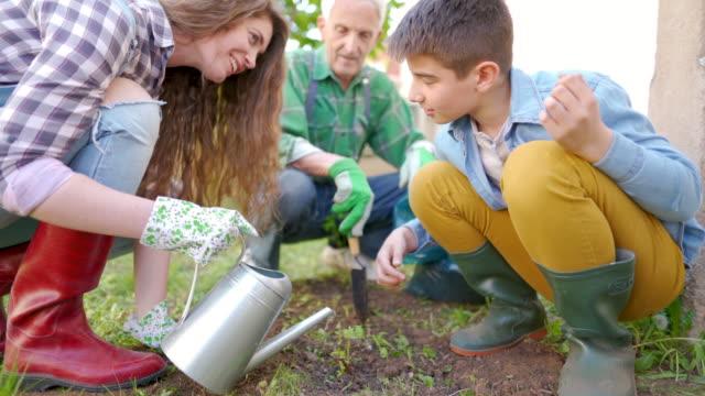 aile bahçe - bahçe ekipmanları stok videoları ve detay görüntü çekimi