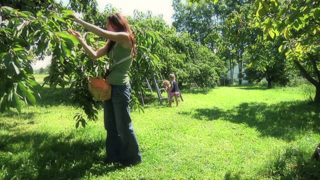 Family in Cherry Orchard video