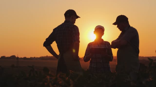 A family of farmers debating in the field at sunset. Family farm and agribusiness concept video