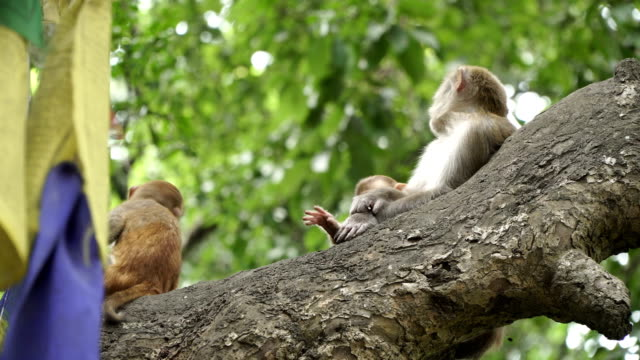 Family of monkeys on a tree video