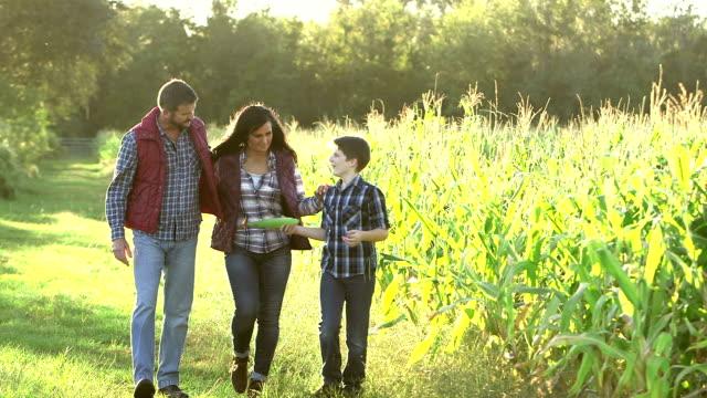 family on farm, walking by field of crops - kukurydza zea filmów i materiałów b-roll