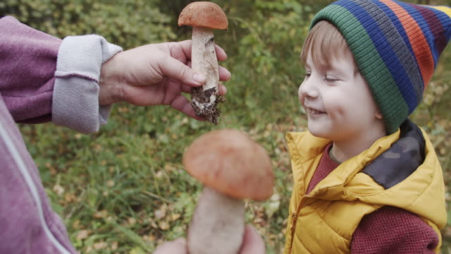 Family picking up Boletus mushrooms in autumn forest