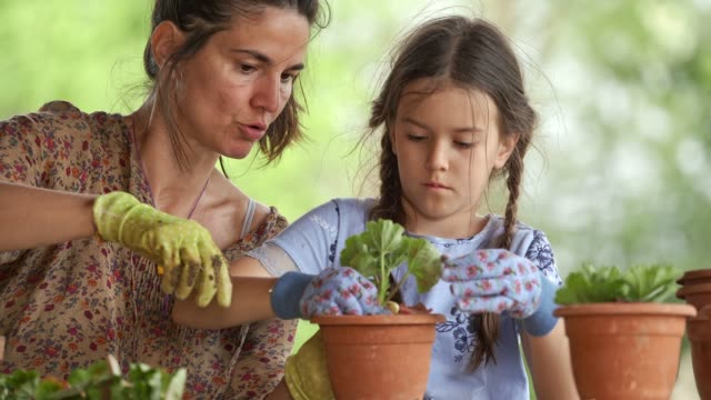 Family planting a flowers in the garden. video