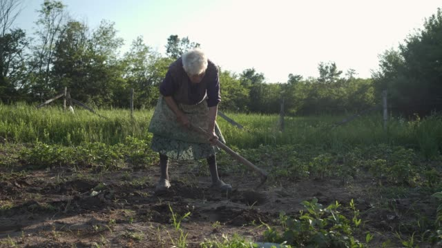 Family planting a vegetables in the garden. video