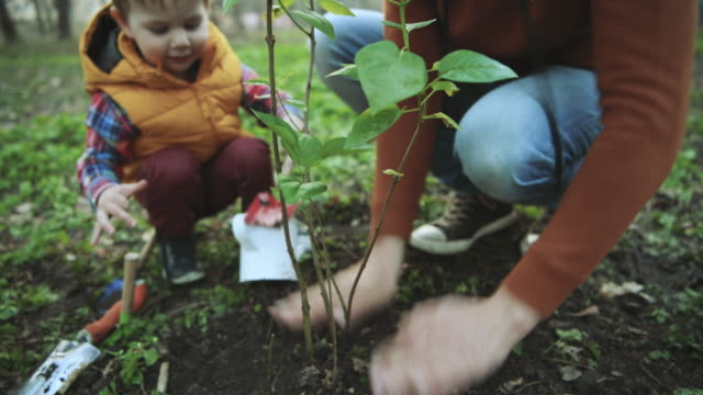 Family planting tree on Arbor day in springtime Little boy and his father gardening in spring horticulture stock videos & royalty-free footage