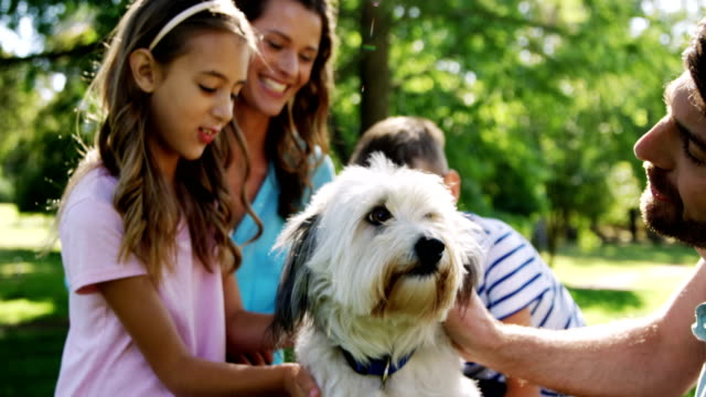 family playing with their dog in the park - animale domestico video stock e b–roll