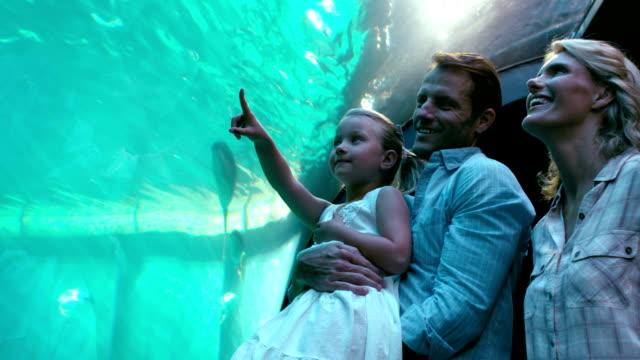 family pointing at fish in the aquarium - akvarium byggnad för djur i fångenskap bildbanksvideor och videomaterial från bakom kulisserna