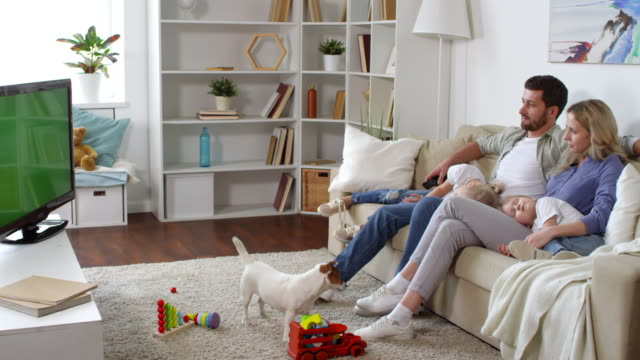 Family Relaxing in Living Room Medium shot of man and woman sitting on sofa and watching TV as their little children sleeping on their laps. Cute Jack Russell terrier dog playing with ball and asking for attention jack russell terrier stock videos & royalty-free footage