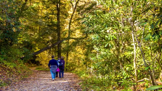 Family Walking Along Hiking Path in Blue Ridge Mountains video