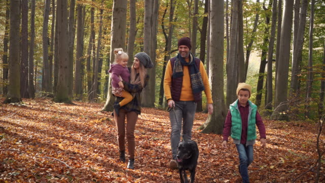 family with dog walking in the forest - vivere semplicemente video stock e b–roll