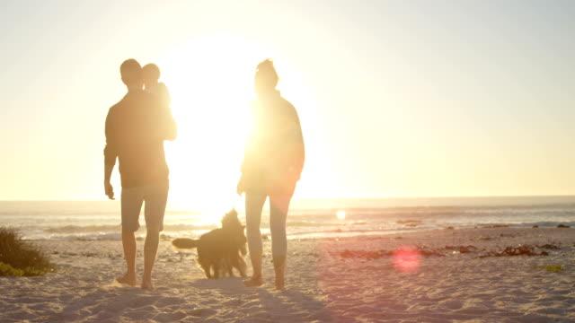 familj med sina hundar att ha kul på stranden 4k - hunddjur bildbanksvideor och videomaterial från bakom kulisserna