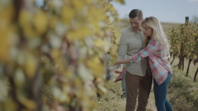 vídeos de stock e filmes b-roll de family with two children in vineyard - uva shiraz