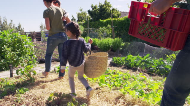 Family Working On Community Allotment Together Parents and children working on community allotment together - shot in slow motion horticulture stock videos & royalty-free footage