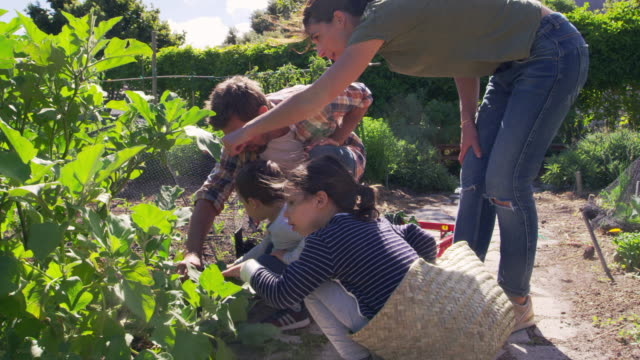 Family Working On Community Allotment Together Parents and children working on community allotment together - shot in slow motion vegetable garden stock videos & royalty-free footage