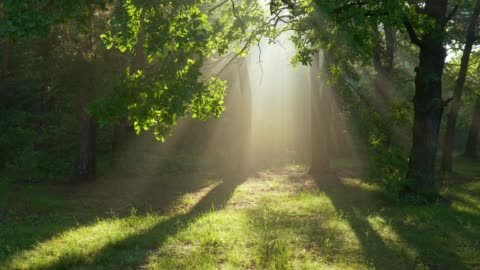 vídeos de stock e filmes b-roll de fantastic foggy morning. camera moves towards the blinding light between the trees. mystical walk in the summer forest - espiritualidade