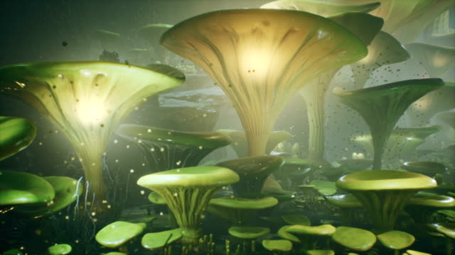fantasy mushrooms in a magic forest. beautiful magic mushrooms in the lost forest and fireflies on the background with the fog. - immaginazione video stock e b–roll