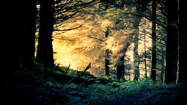 Fantasy Sunrise In The Forest
