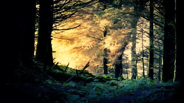 ormanda fantezi gündoğumu - fantastik stok videoları ve detay görüntü çekimi