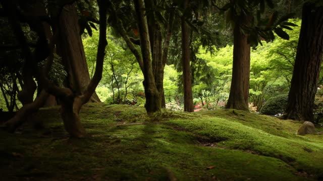 fantasy zen forest background video