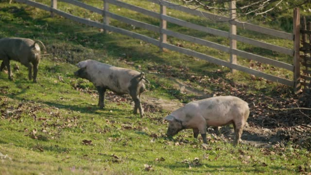 Farm Animals. Tourism video