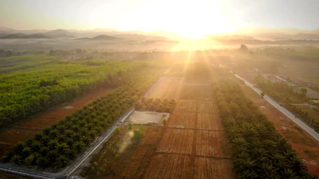 farm at morning aerial view