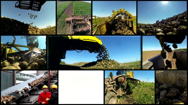 Farm Equipment Harvesting Sugar Beet video