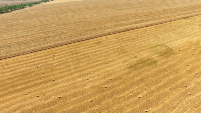 vídeos de stock e filmes b-roll de aerial: farm fields after harvesting in autumn - multicóptero