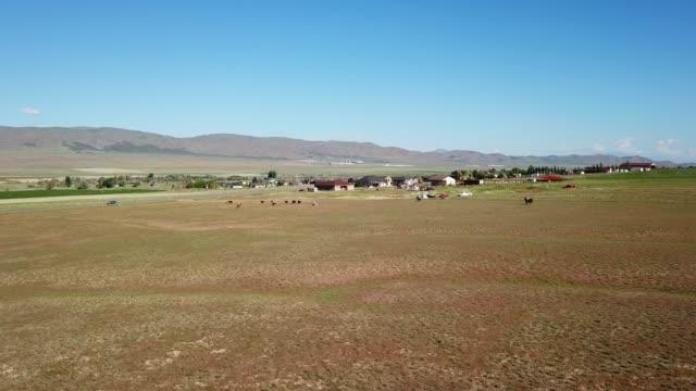 農場、畑、カウボーイとカウガール、馬と牛猫 - 牧畜場点の映像素材/bロール