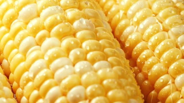 gård färsk söt gul majs med vattendroppar. - skalhylsa bildbanksvideor och videomaterial från bakom kulisserna