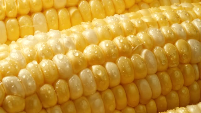 vídeos de stock e filmes b-roll de farm fresh sweet yellow corn with water droplets. - corn