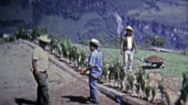 1973: Farm hand workers tending to high elevation terraced fields. video