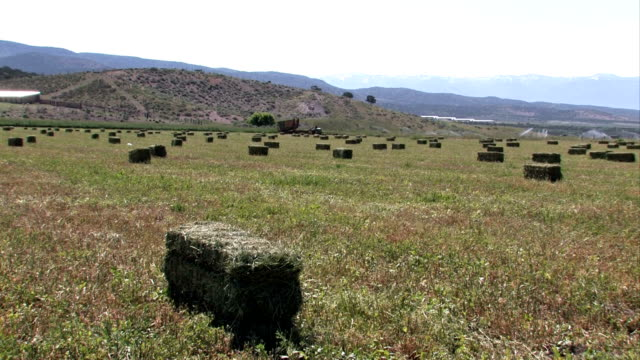fieno bales in campo fattoria - erba medica video stock e b–roll