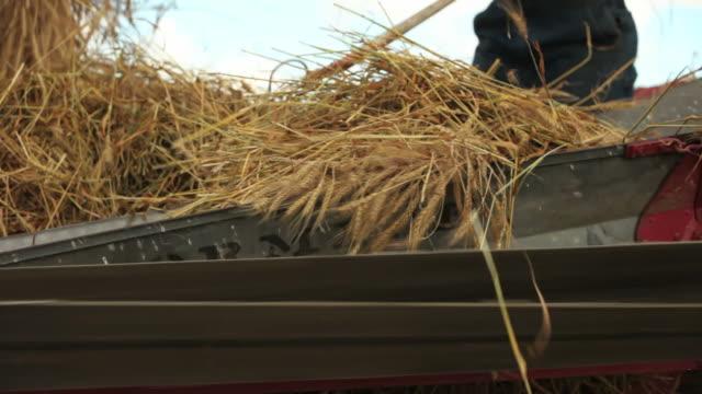vidéos et rushes de travail à la ferme - foin