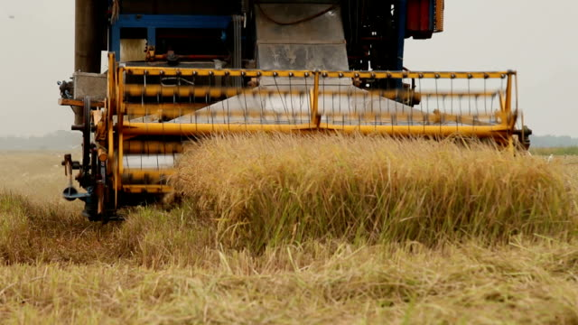 Farm worker harvesting rice with Combine machine video