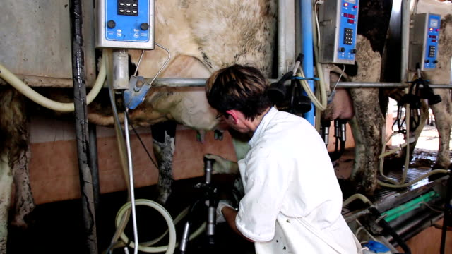 vídeos de stock e filmes b-roll de trabalhador rural ordenhar vacas - ordenhar