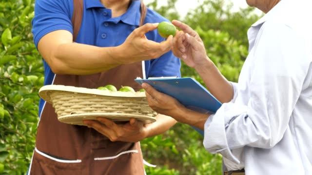農家とビジネスマンは、品質の緑のライムをチェック - 収穫点の映像素材/bロール