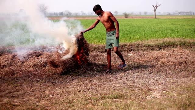 草を焼く農家 - ハリヤナ州点の映像素材/bロール