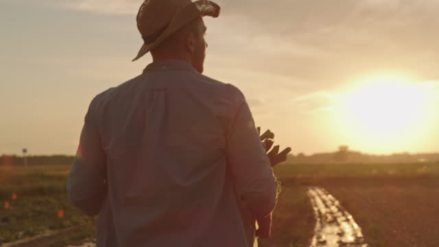 SLO MO Farmer carries a crate full of vegetables on the field at sunset