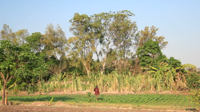 Farmer carries tools across field in Malawi, Africa video