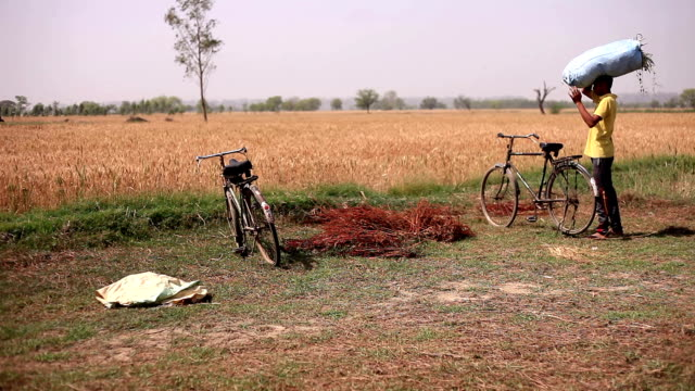 Farmer carrying sack of grass on cycle to home video
