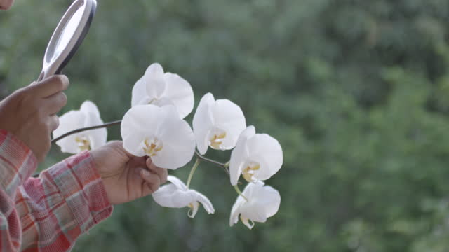 Farmer Check White Orchid Slow Motion