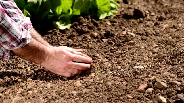 Farmer checking soil quality video